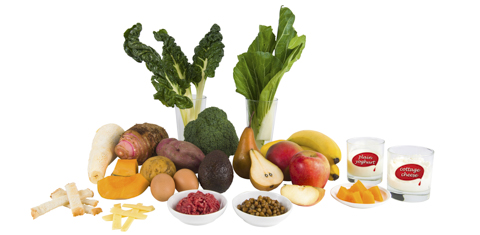 Vegetables (silver beet, bok choy, broccoli, avocado, taro, kumara, potato, cassava, pumpkin), toast fingers, strips of cheese, eggs,  bowl of raw mince, bowl of legumes, fruit (pear, apple, mango, bananas, soft small pieces of fruit, glass of cottage cheese, glass of plain yoghurt