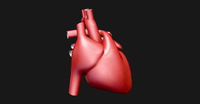 An animation of the human heart
