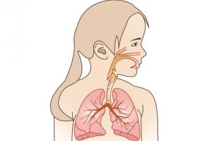 Illustration of a child's respiratory system